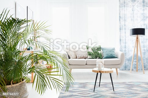 istock Plant in bright living room 883744322