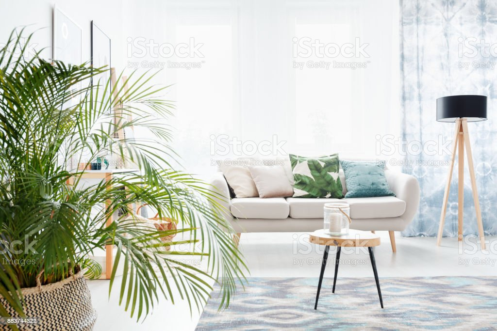 Plantar na luminosa sala de estar - foto de acervo