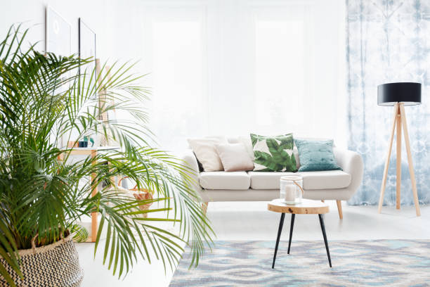 plant in bright living room - home decor boho imagens e fotografias de stock