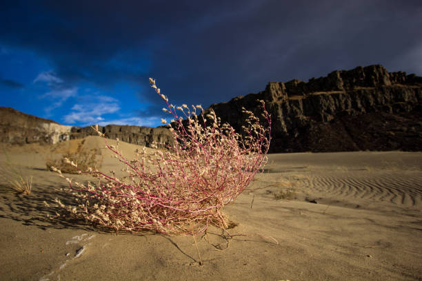Plant in Desert Coulee stock photo