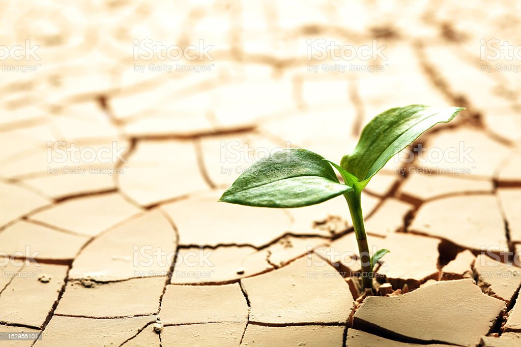 Plant in dried cracked mud stock photo
