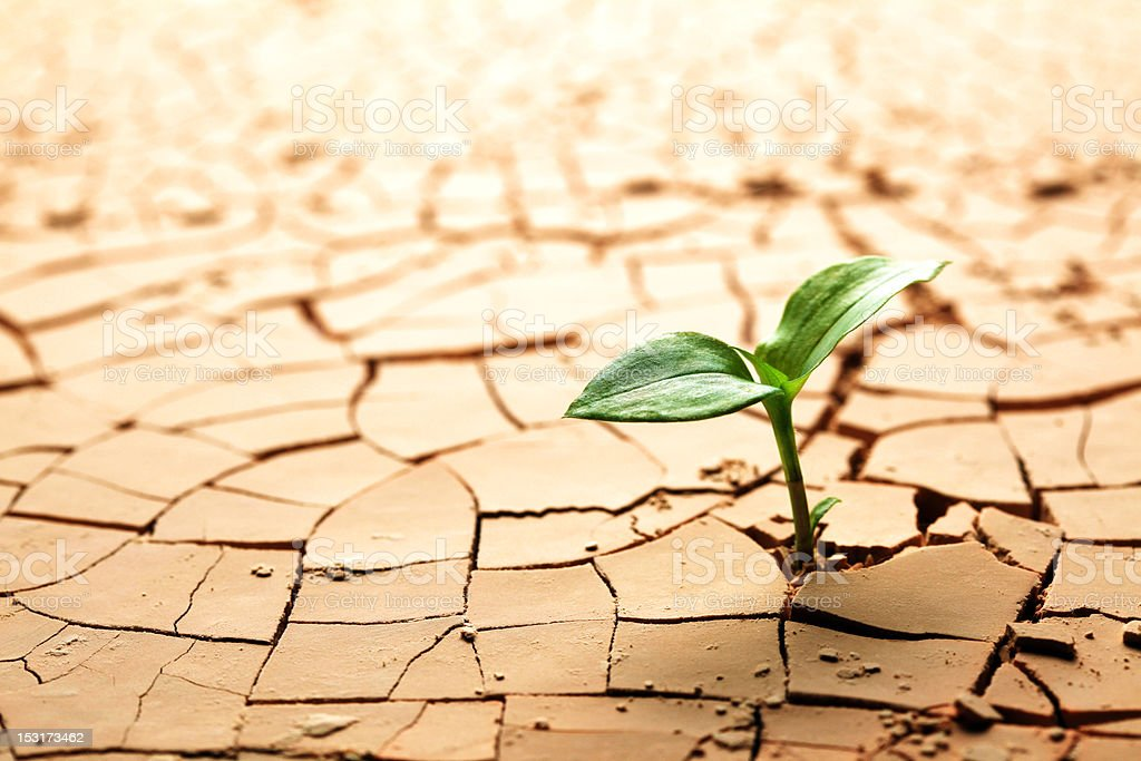 Plant in dried cracked mud royalty-free stock photo