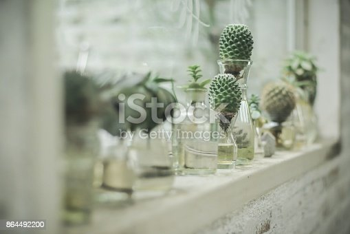 Plant In Glass Bottle Cactus In The Garden Terrarium Mini Succulent