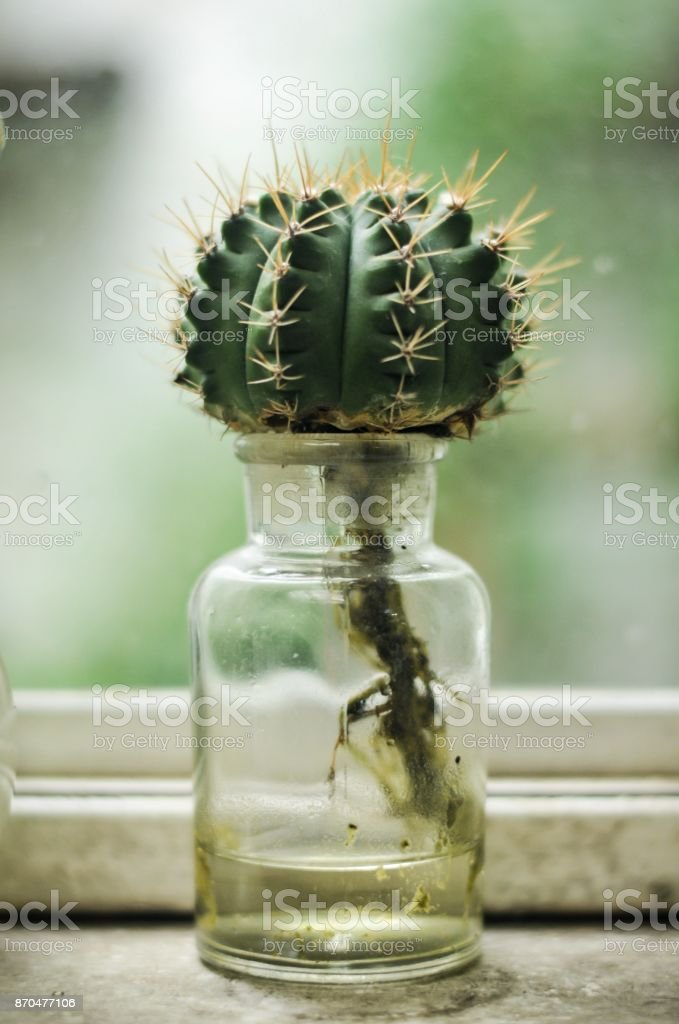 Plant In Glass Bottle Cactus In The Garden Terrarium Mini Succulent And Cactus Garden In Glass Terrarium Branch Flowers Glass Of Bottle Decorations Stock Photo Download Image Now Istock