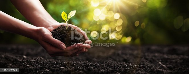 Close Up Plant in Female Hands. Care of the Environment. Ecology concept