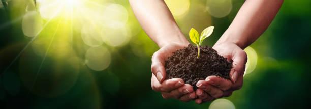手の中の植物。生態学の概念 - 苗 ストックフォトと画像