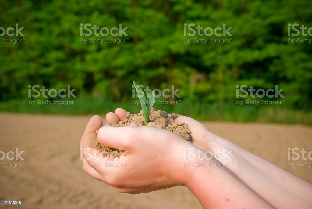 plant in palms royalty-free stock photo