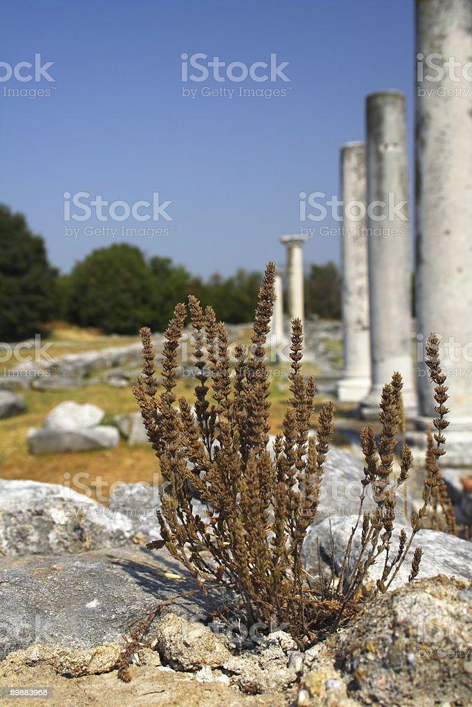 plant in Philippi royalty-free stock photo