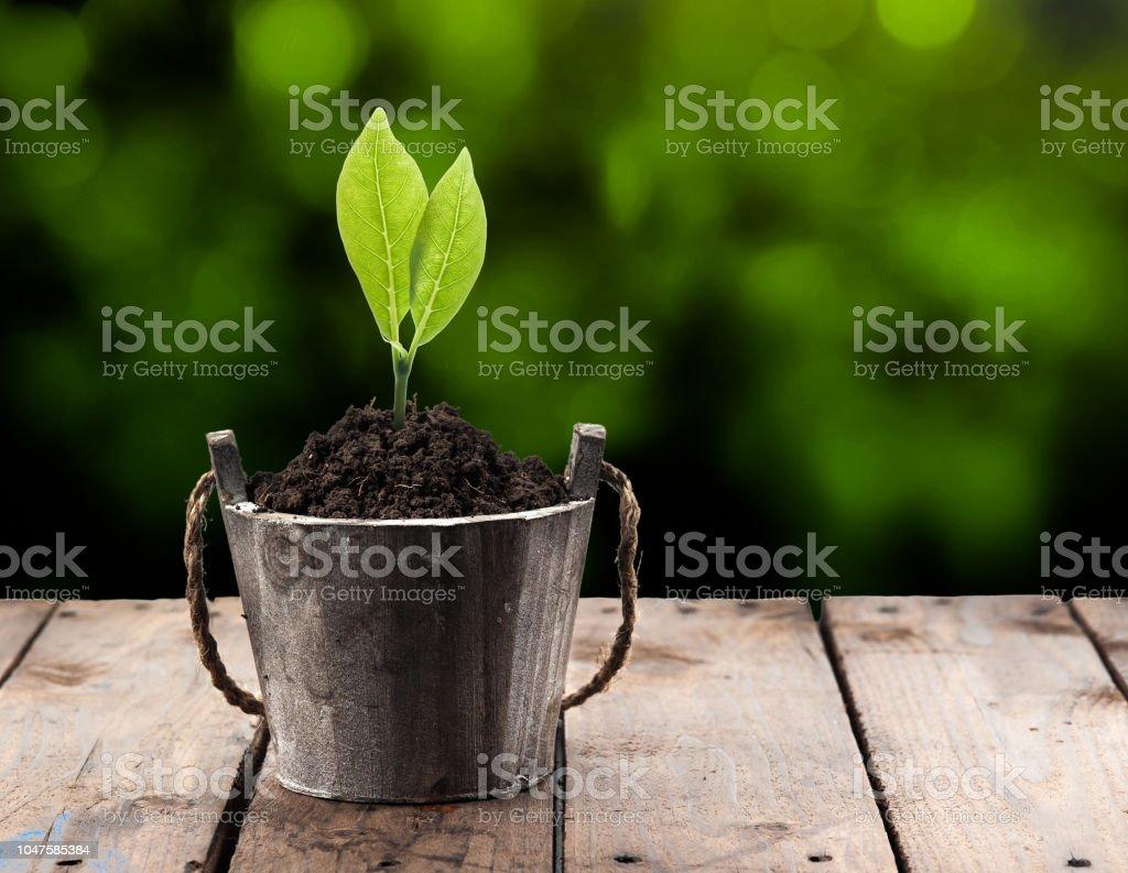 Pot Plante En Bois photo libre de droit de plante en pot sur la perspective de