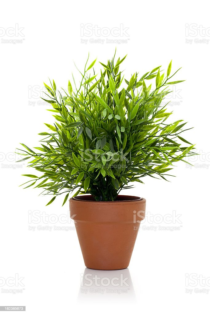 Plant in pot royalty-free stock photo