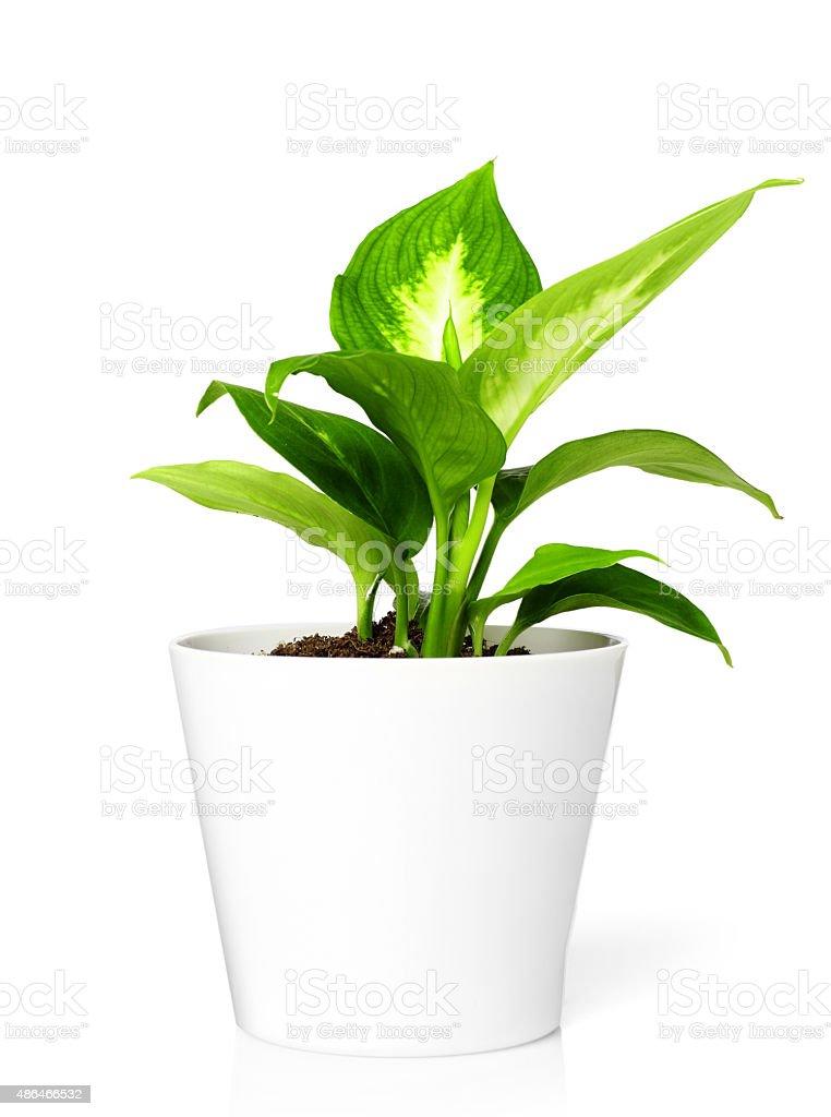 Plant in pot stock photo