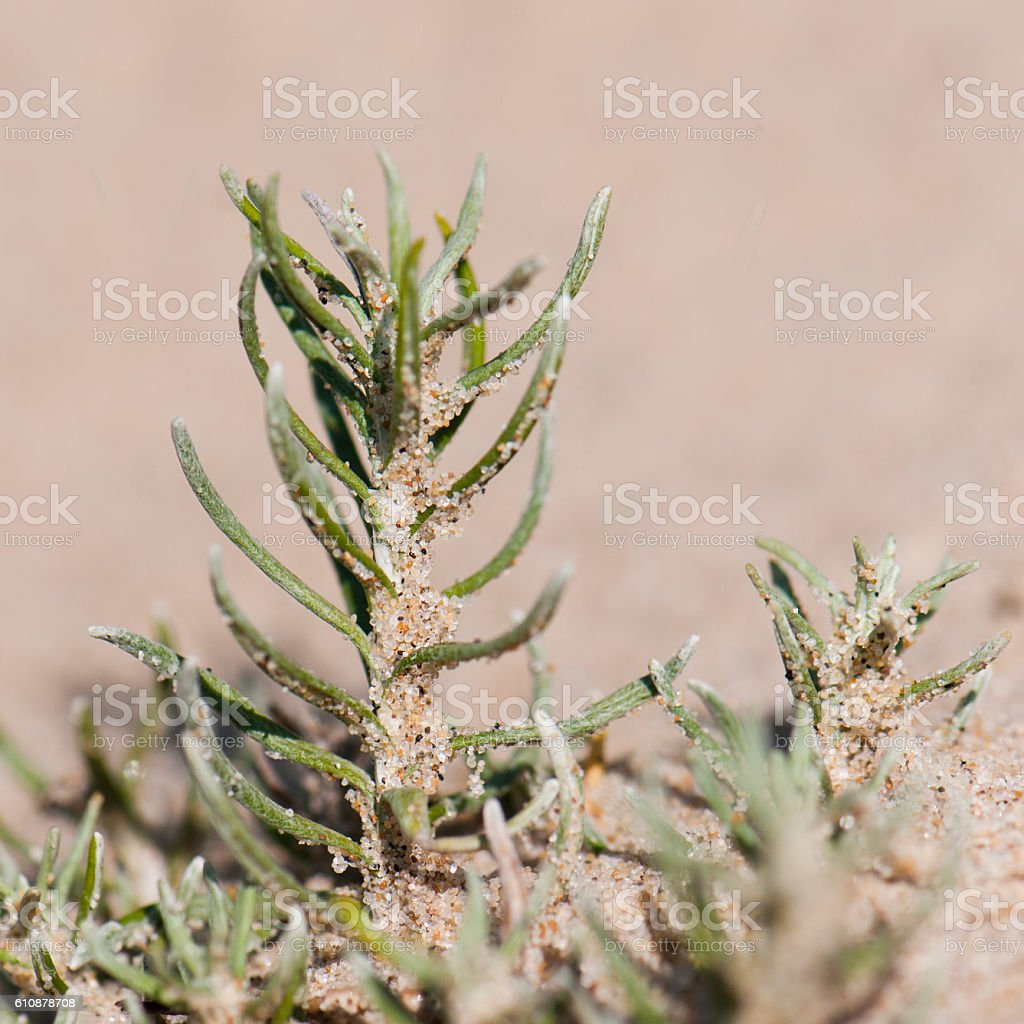 Plant in sand stock photo