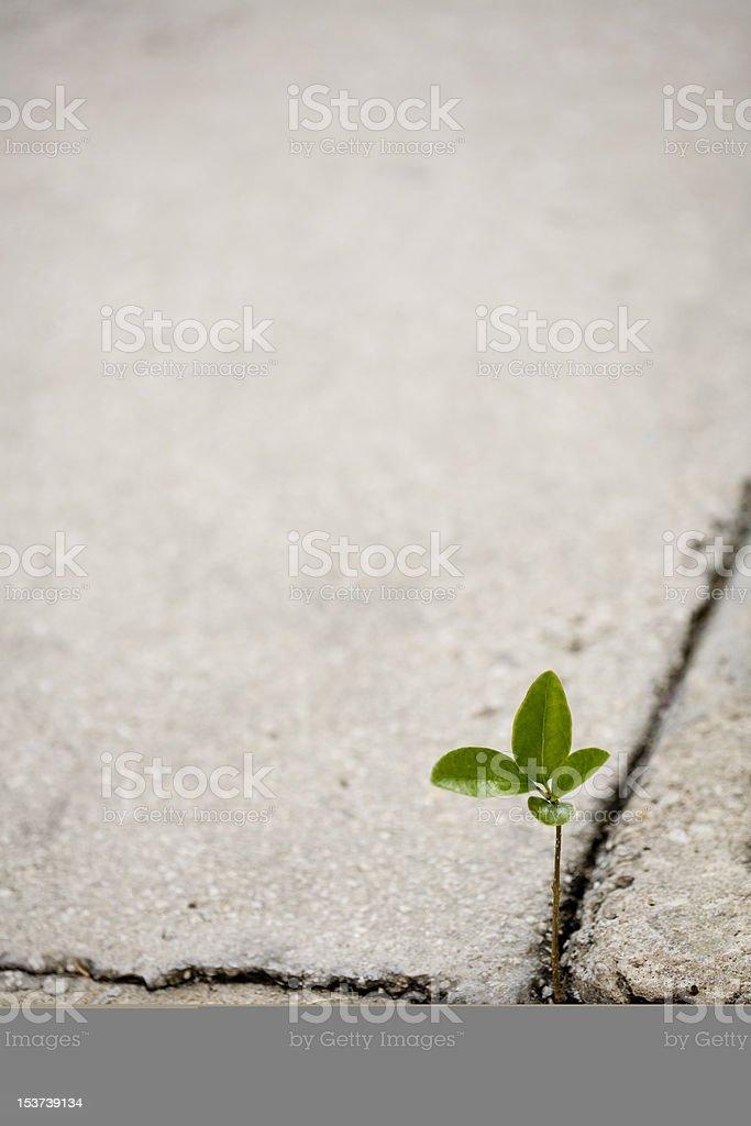 Plant in sidewalk stock photo