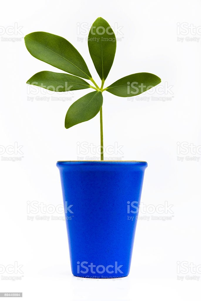 Plant in small flower pot royalty-free stock photo
