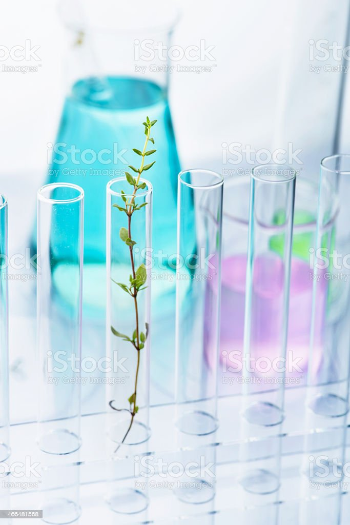 Plant in test tube in a lab environment stock photo