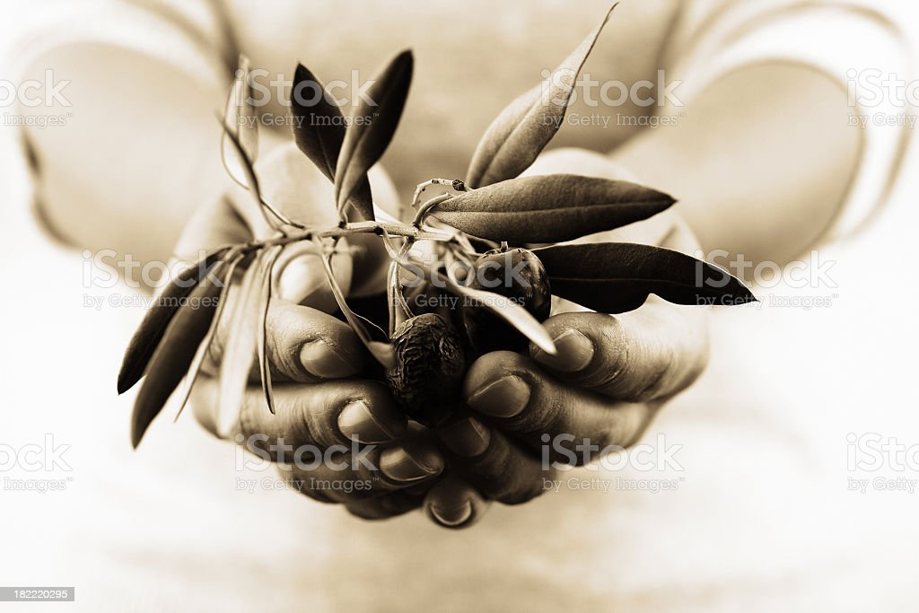 Plant in the hand royalty-free stock photo