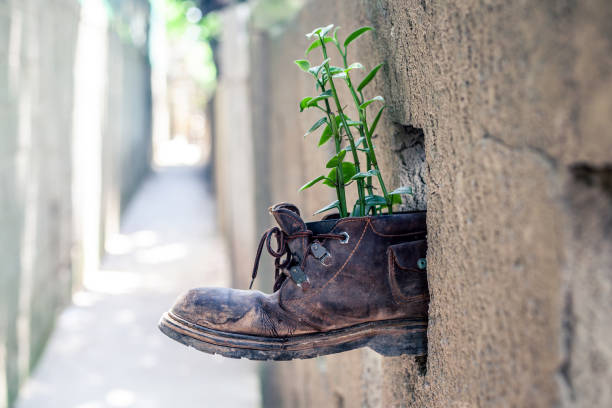 Plant in the old shoe stuck in the stone wall stock photo