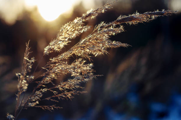 Plant in the sunset, winter contrasting background, orange and blue dark macro stock photo