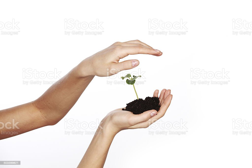 plant in the women hands royalty-free stock photo