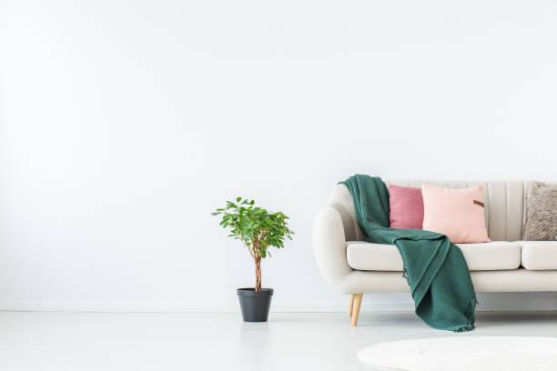 pflanzen sie in weißen wohnzimmer - hellrosa zimmer stock-fotos und bilder