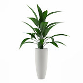 plant isolated in the pot at the white background