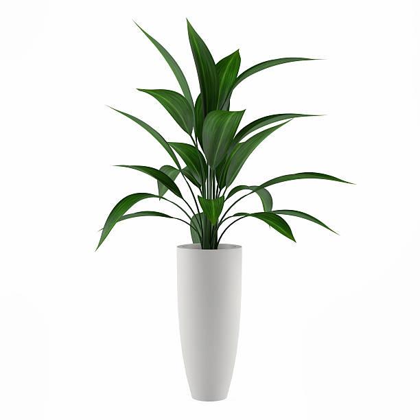 Plant isolated in the pot picture id463123467?b=1&k=6&m=463123467&s=612x612&w=0&h=mu0xwp65vj8o0uv3vxojwprpc5jv f is3lupg b29g=