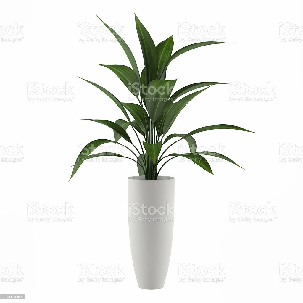 plant isolated in the pot stock photo