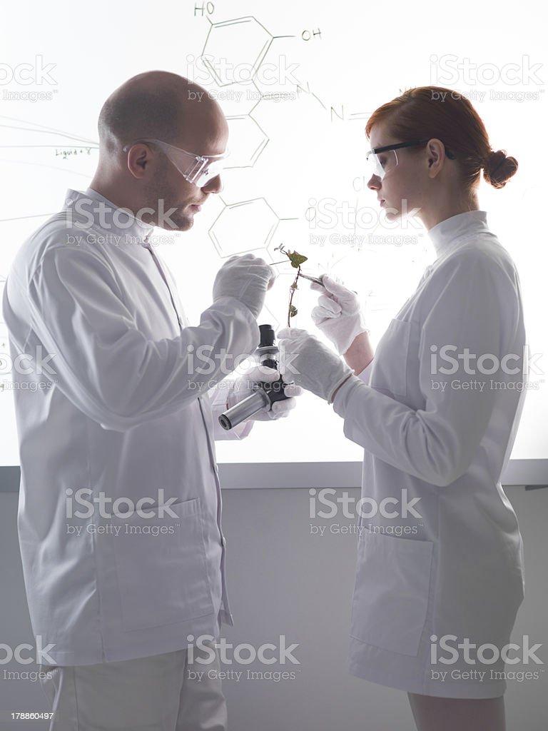 plant laboratory analysis royalty-free stock photo