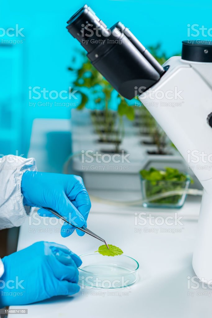 plant laboratory biology technician working with plants