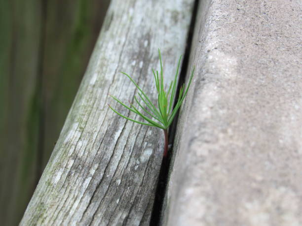 Plant Life in the Cracks stock photo