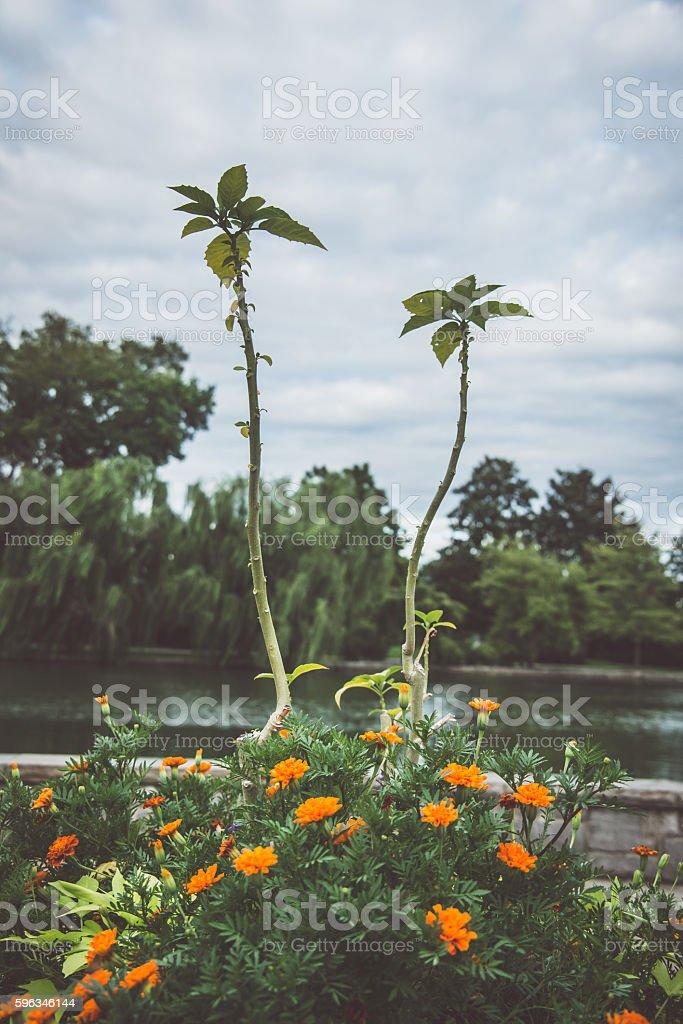 Plant life royalty-free stock photo