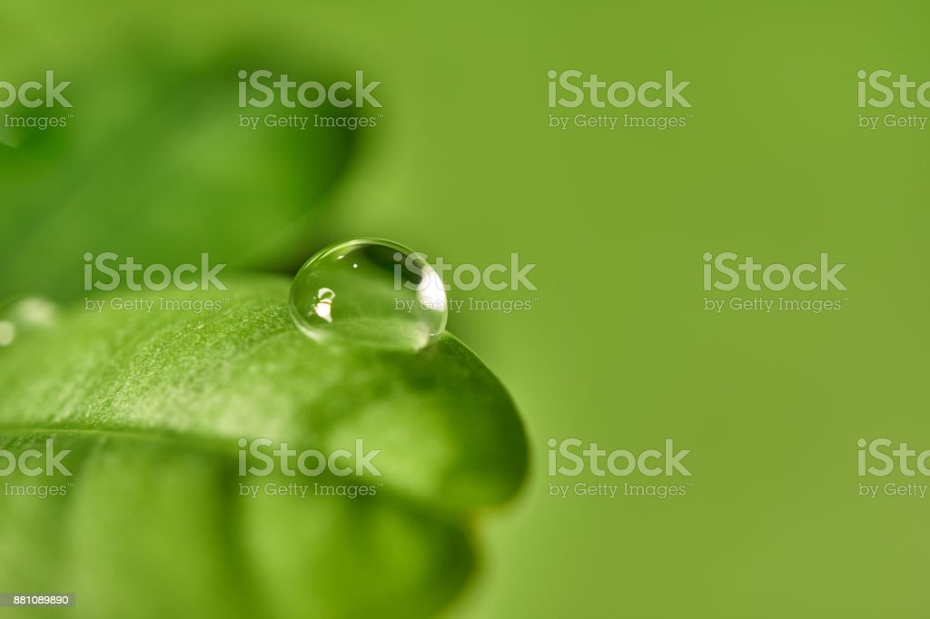 Plant list with a drop of water stock photo