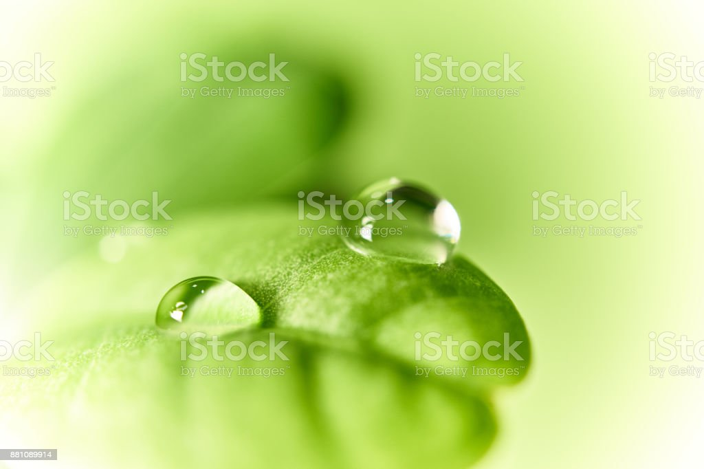 Plant list with a drops of water stock photo
