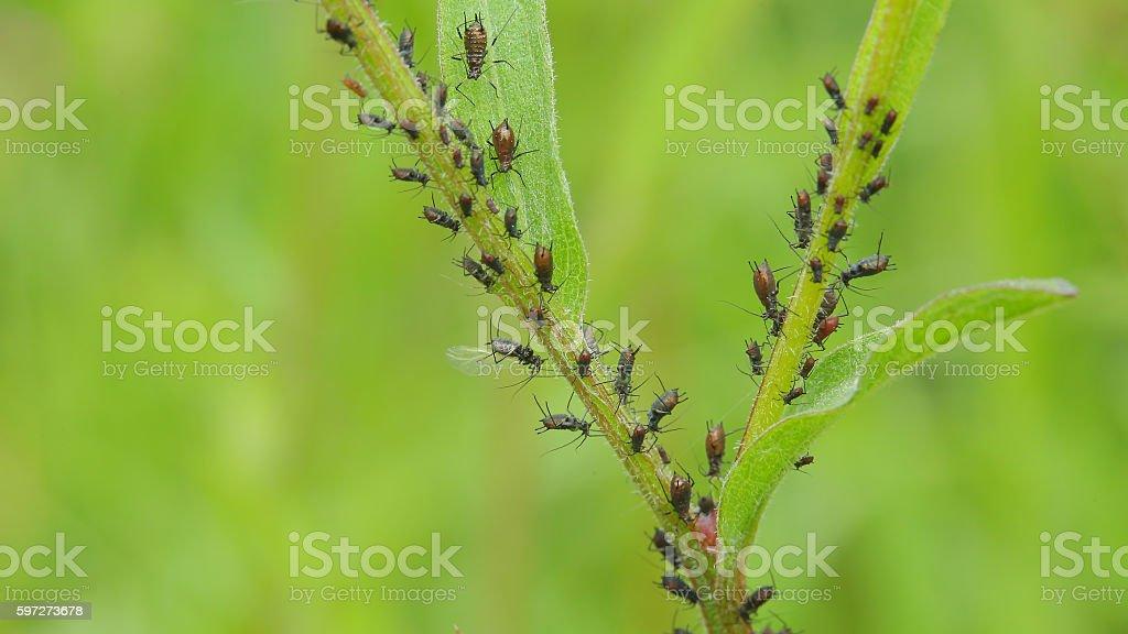 Plant louse stock photo