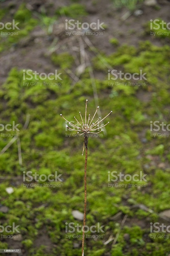 Plant Macro A weathered plant prepares itself for spring against a green moss background. Bright Stock Photo