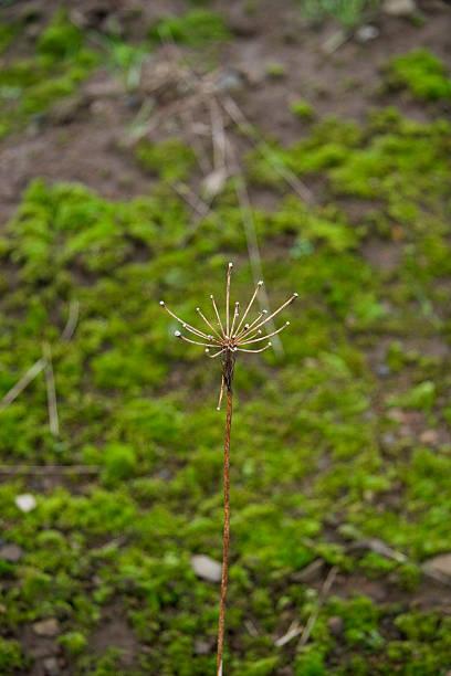 Plant Macro stock photo