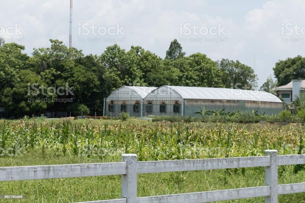 plant nursery greenhouse in farmland - Foto stock royalty-free di Agricoltura