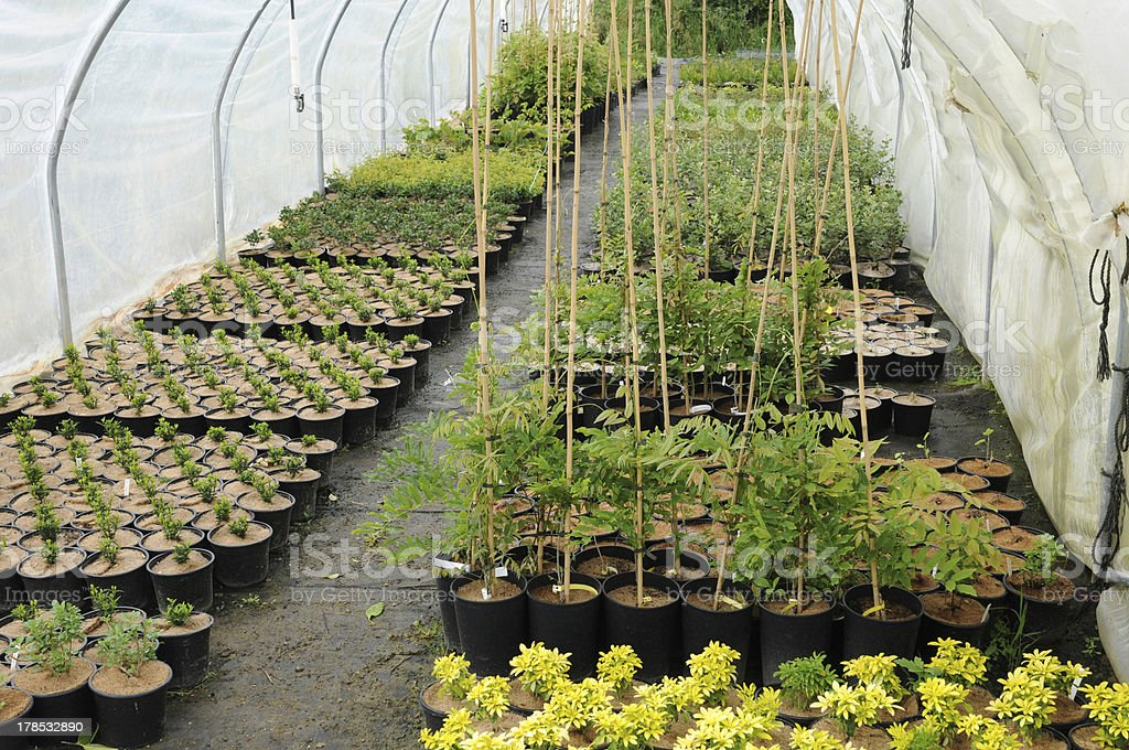 plant nursery in Brittany royalty-free stock photo