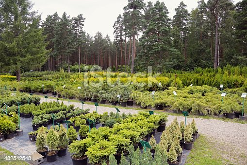 plant nursery with different kind of seedlings