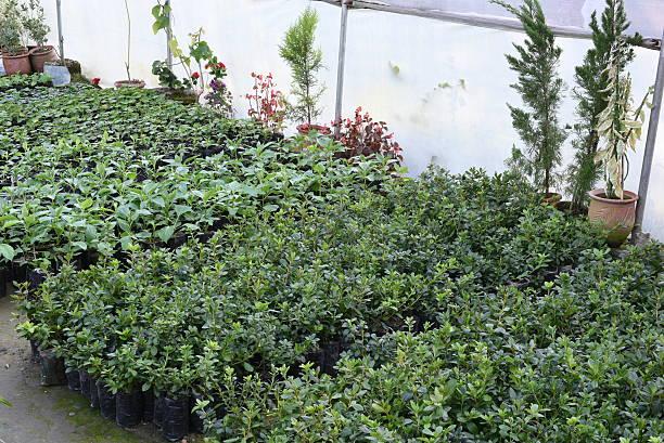 plant nursery mit hübschen pflanzen - lila, grün, schlafzimmer stock-fotos und bilder