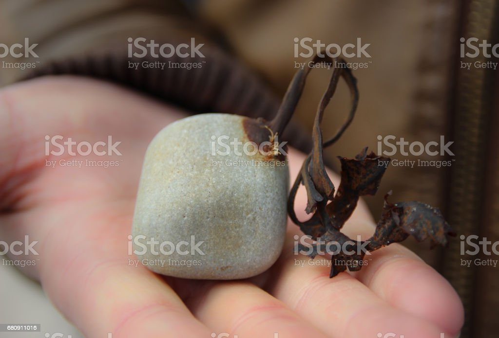 Plant on a stone royalty-free stock photo