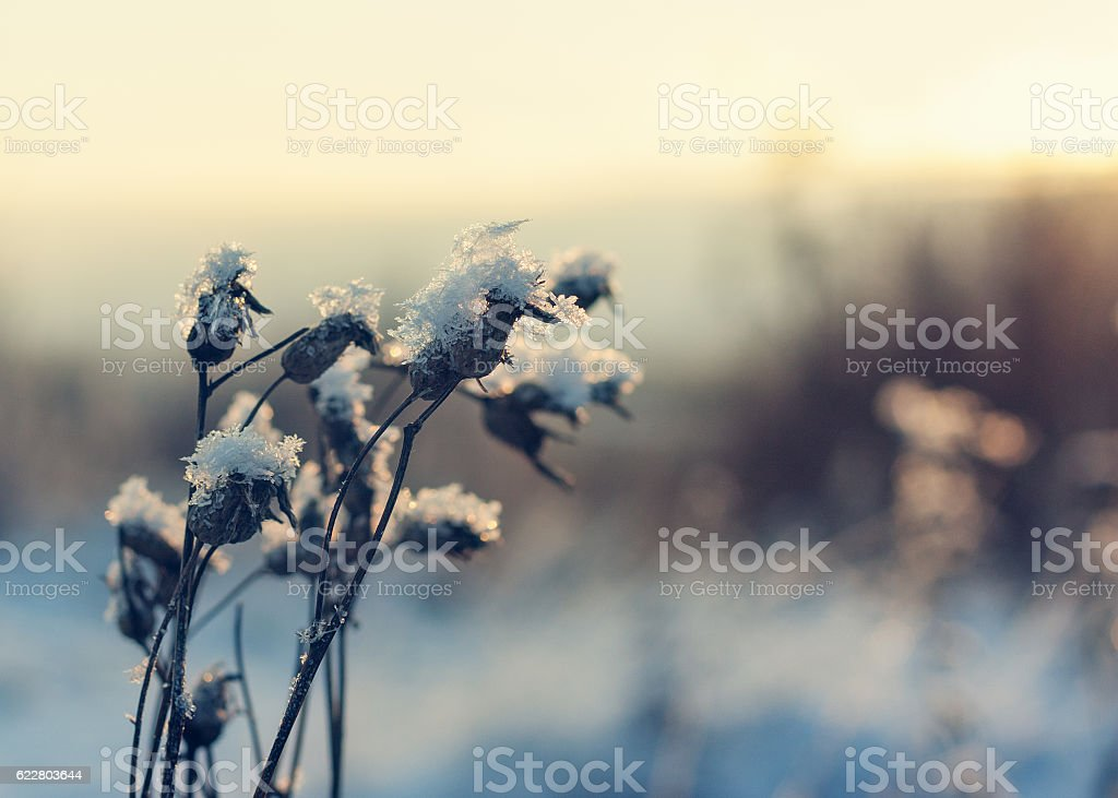 Plant on a sunny day in December. stock photo