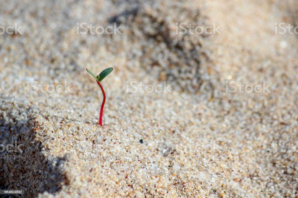 Plant on beach royalty-free stock photo