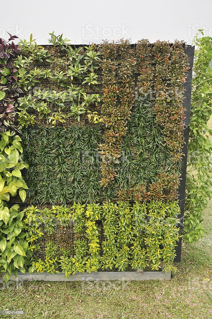 Plant on Bulidng Surface / Green Wall royalty-free stock photo