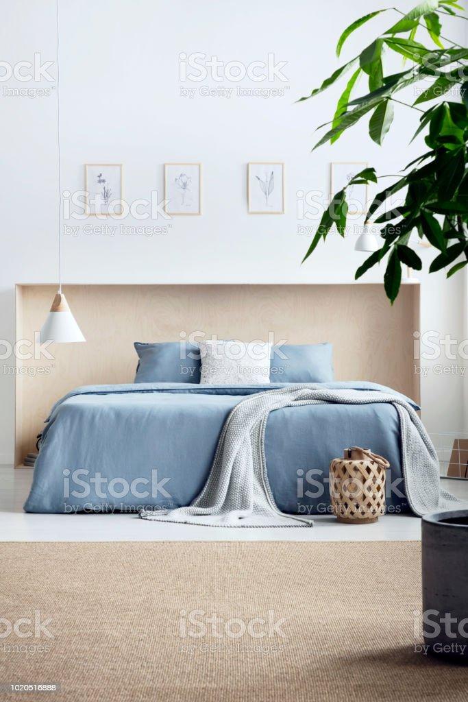 Pflanzen Sie Auf Teppich Innen Helle Schlafzimmer Mit Plakaten Und Lampe Uber Blaues Bett Echtes Foto Stockfoto Und Mehr Bilder Von Bett Istock