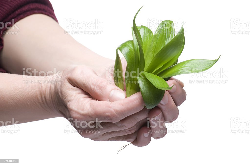 Plant on hand royalty-free stock photo