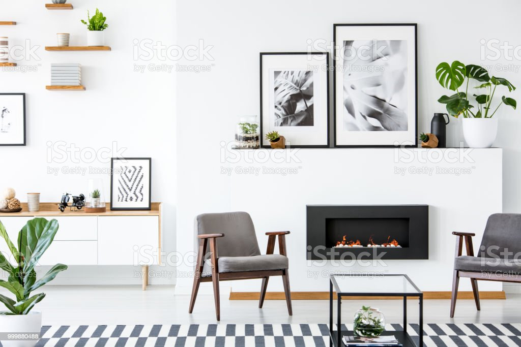Plant on patterned carpet in living room interior with grey armchairs and posters. Real photo