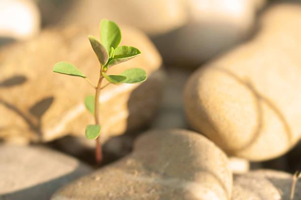 Pflanze auf Steinen – Foto