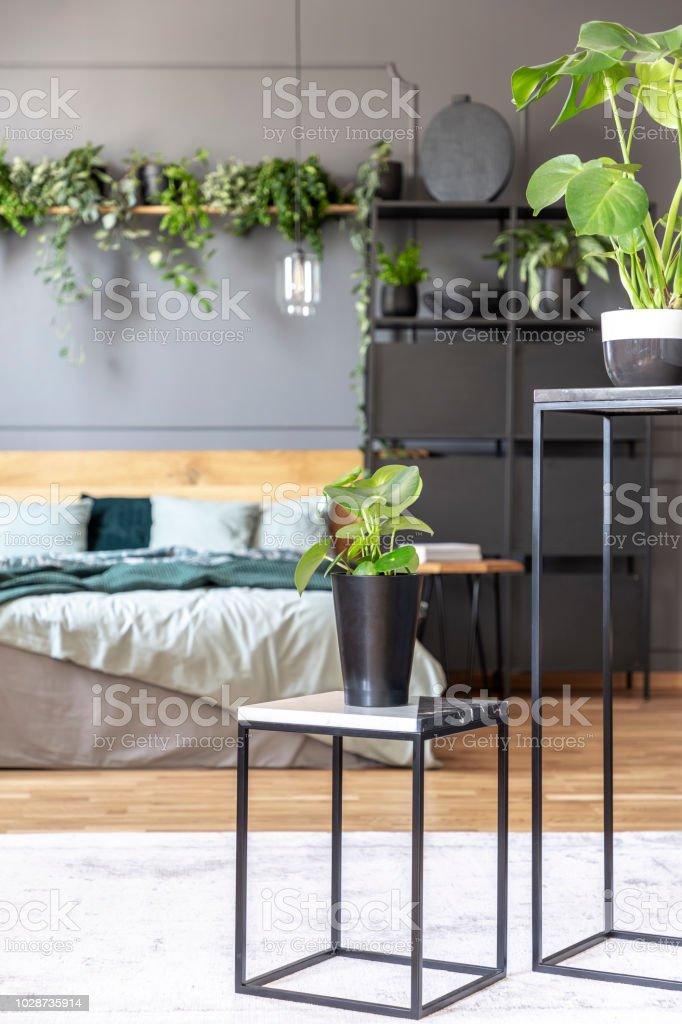 Photo libre de droit de Plante Sur La Table À Lintérieur De ...