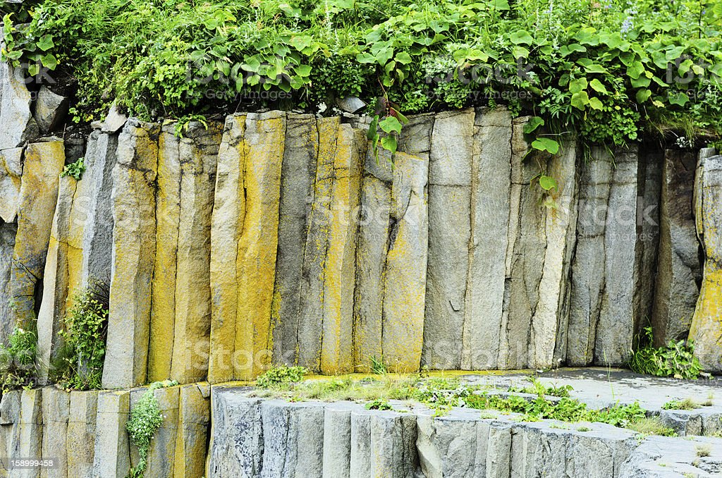 Plant on the rocks royalty-free stock photo